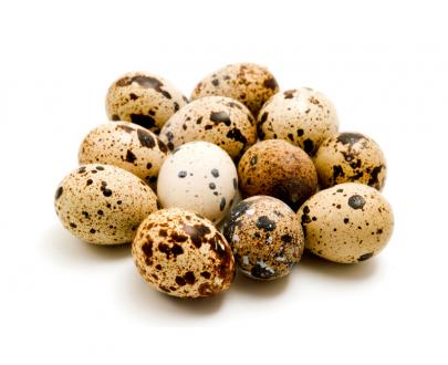 Uova di quaglia fresche