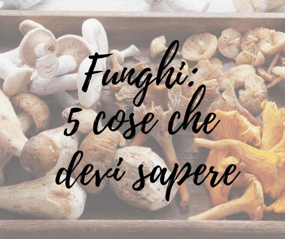 5 Cose che devi sapere sui Funghi
