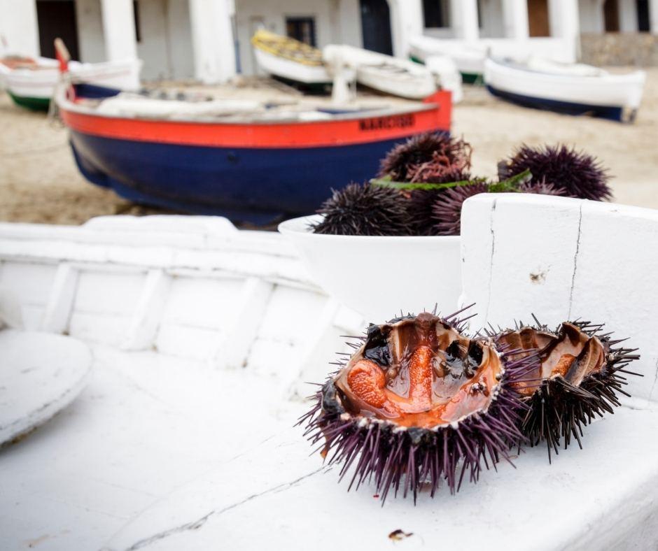 6 cose da sapere sui ricci di mare