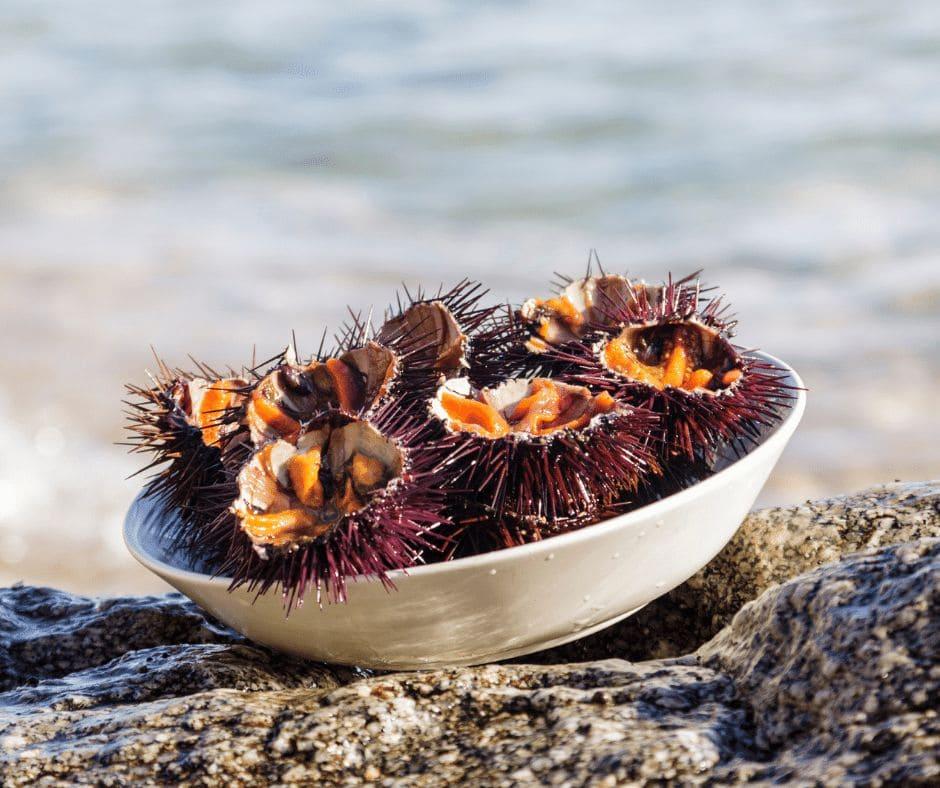 Riccio di mare: le specie commestibili