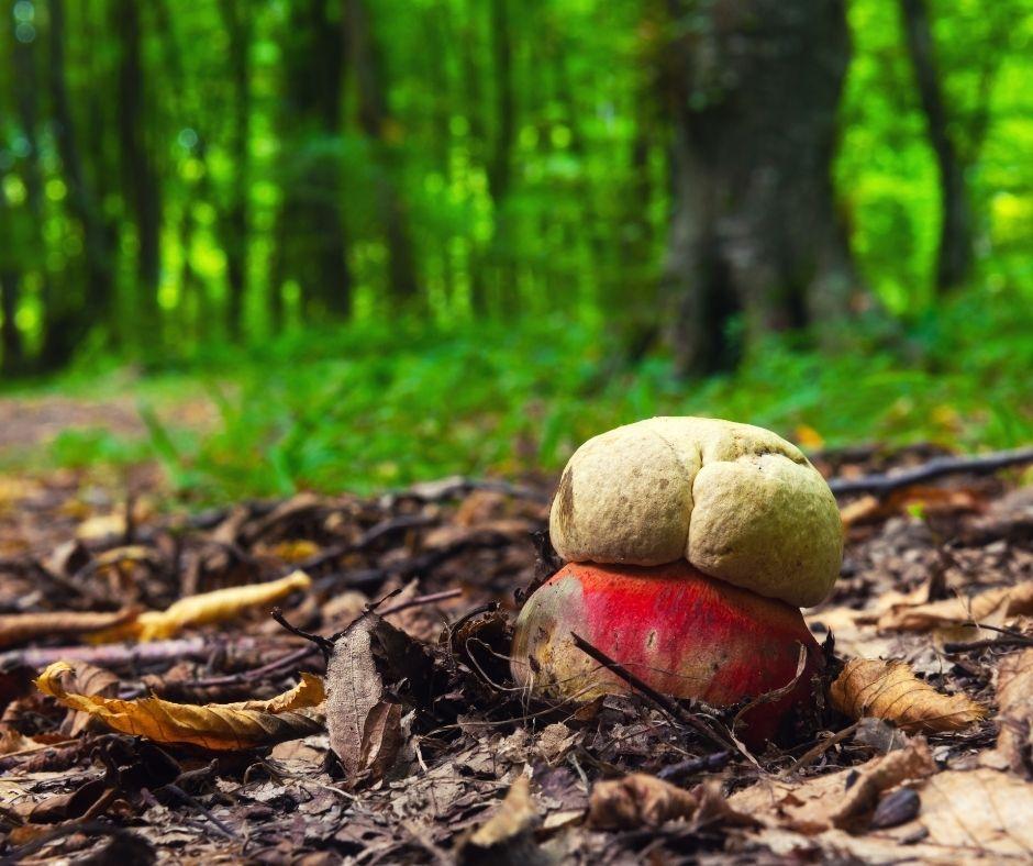 I funghi mortali e velenosi